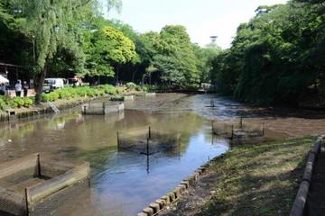 水が抜かれた森林公園下池