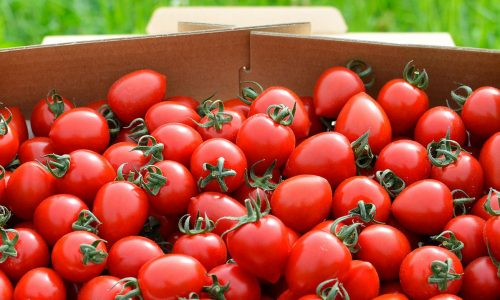 清水農園(壮瞥町)のトマトジェラートが美味い!通販でも買える?