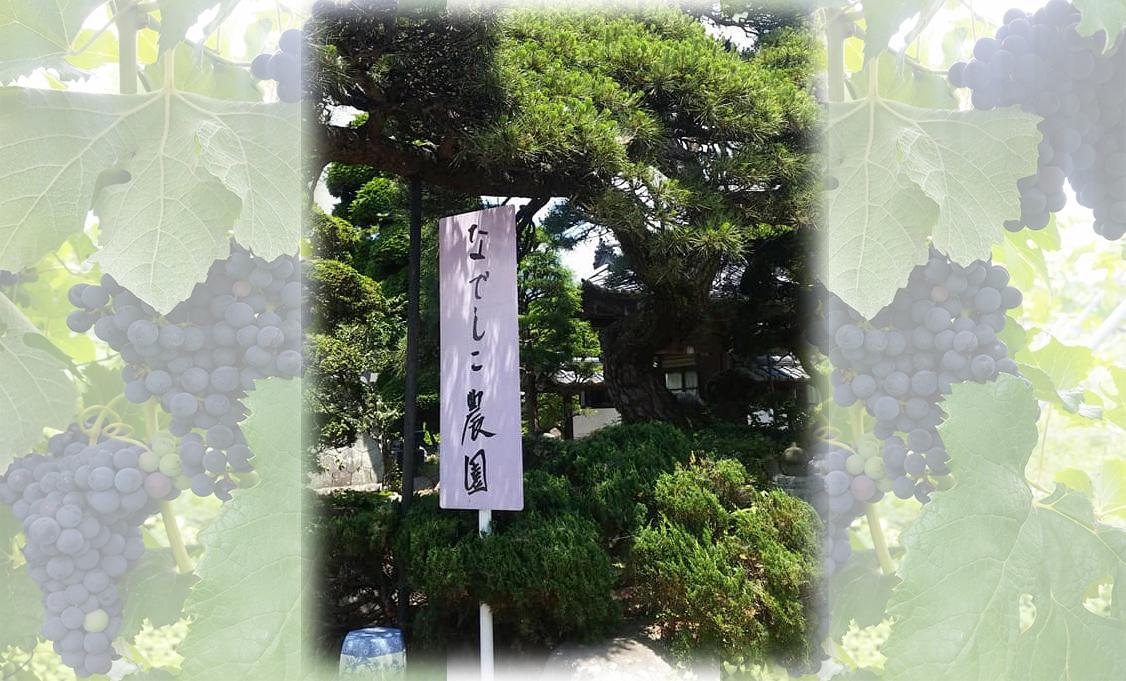 バルサミコ酢(なでしこ農園)の通販!おすすめレシピは?【青空レストラン】