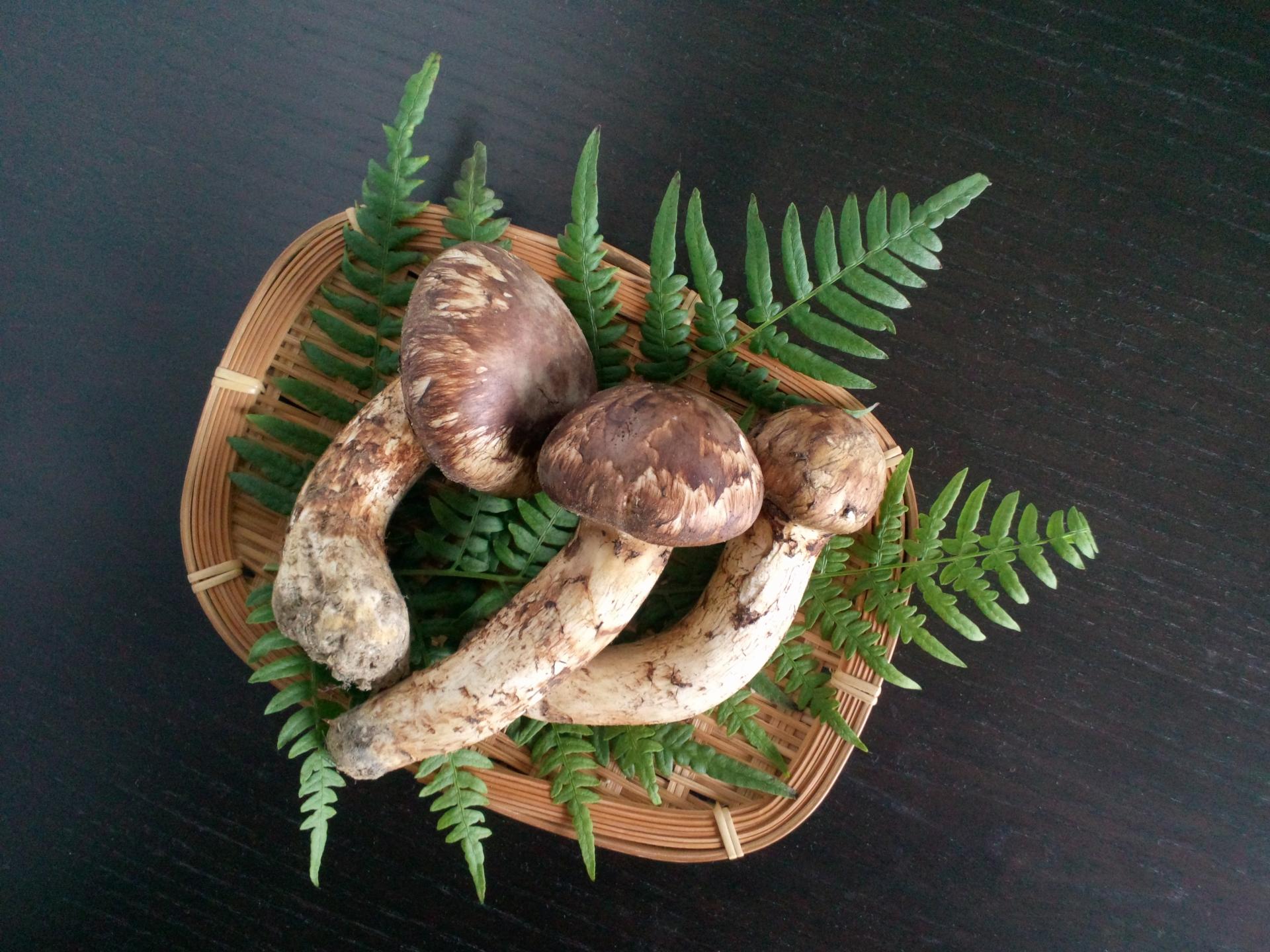 別所温泉の松茸とカピトリーノピッツァの通販・お取り寄せ情報!【青空レストラン】