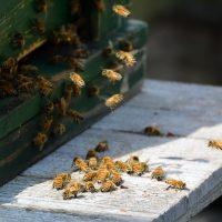 鷲宮養蜂園(久喜市)のはちみつの購入方法は?通販とお店を紹介!