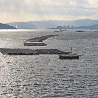 【青空レストラン】広島の黒鯛(チヌ)の通販・お取り寄せ情報!