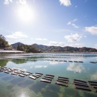 【青空レストラン】クレールオイスター(大崎上島)の通販・お取り寄せ情報