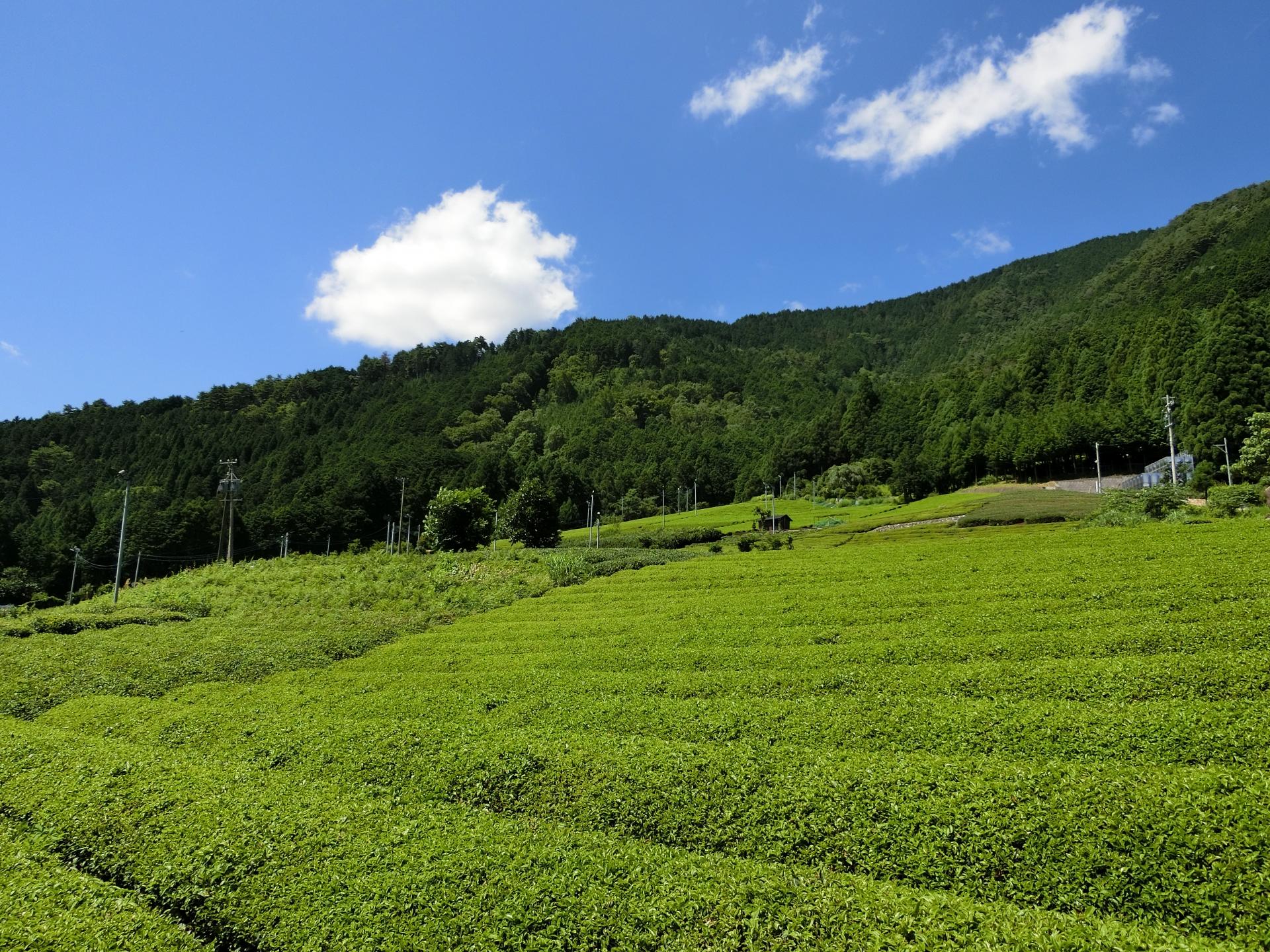 山田泰珠(天空の茶畑)のお茶の実油や古来茶の通販・販売店情報!