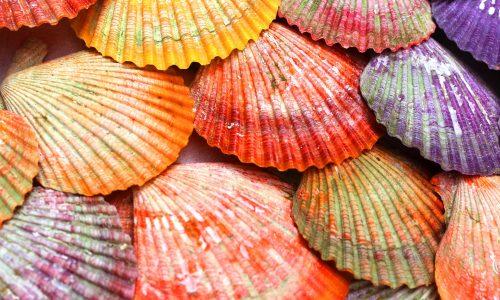 【青空レストラン】ヒオウギ貝の通販・お取り寄せ情報!おすすめレシピも!