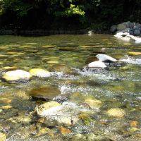 【青空レストラン】アマゴの甘露煮(郡上炊き)の通販・お取り寄せ情報