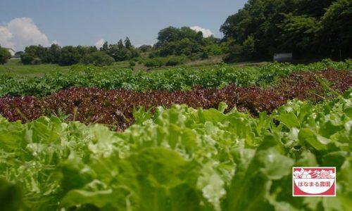 【青空レストラン】夏野菜(はなまる農園)の通販・お取り寄せ情報!