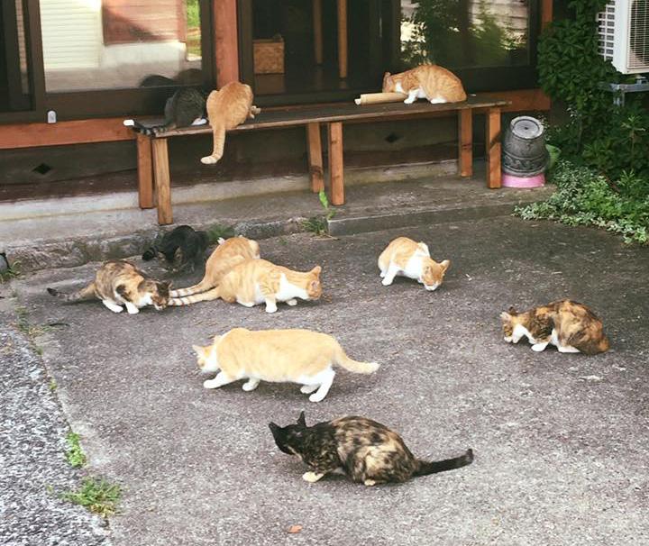 「そらいろのたね」の猫さんたち