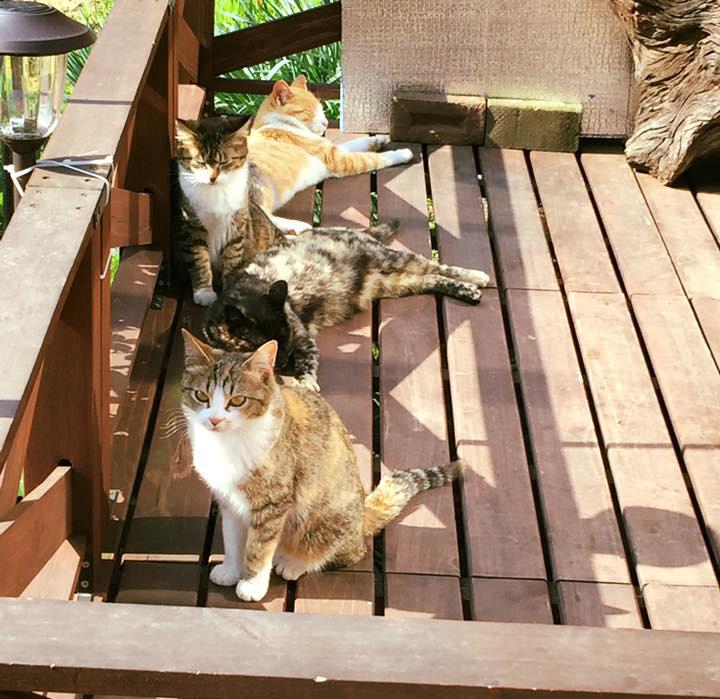 ウッドデッキでくつろぐ猫さんたち