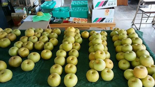 「福田農園」の梨