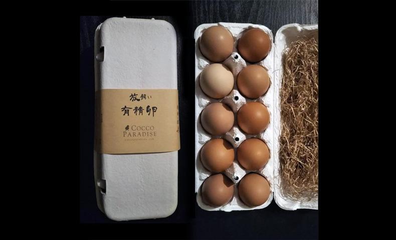 「コッコパラダイス」の卵