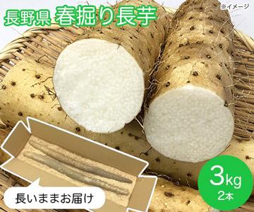 長野県 春掘り長芋3kg