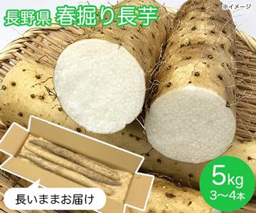 長野県 春掘り長芋5kg