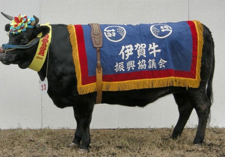 肉の横綱 伊賀牛